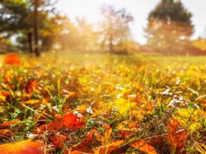 Péče o trávník v podzimním období