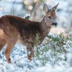 Jak v zimě chránit stromky před zvěří