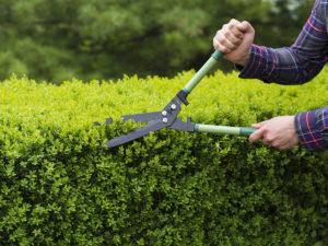 Zastřihujte pravidelně váš plot